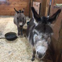Donkeys