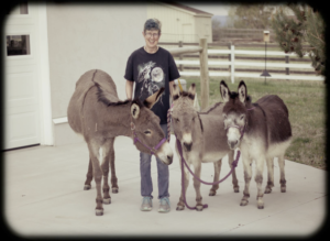 Lisa and her three donkeys