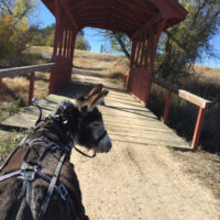 Donkey about to cross a covered bridge