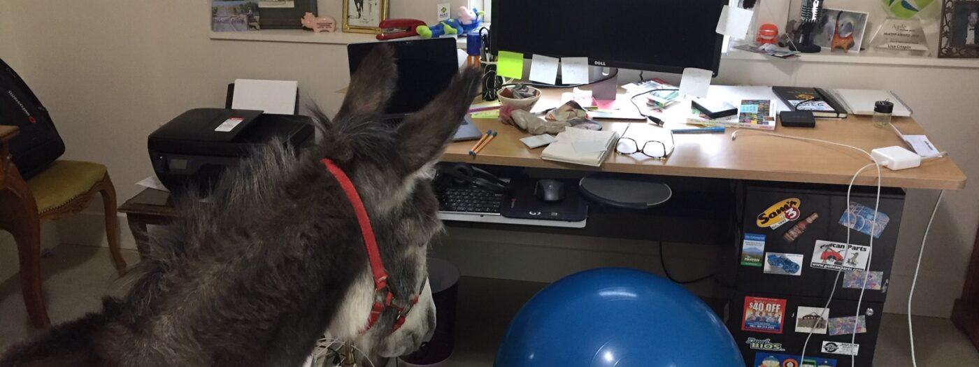Donkey inside an office