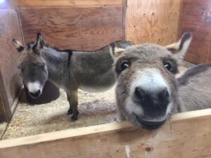 Ernest and our guest donkey, Penny